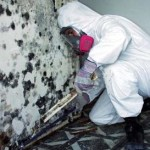Mold Removal Tech(1)